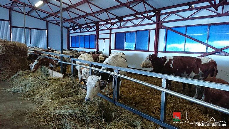 В Тамбовской области открылась молочная ферма