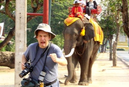 во время гона слоны крайне агрессивны
