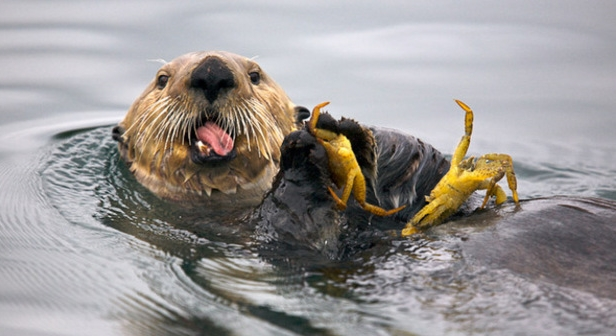http://gursesintour.com/wp-content/uploads/fern-harbor-sea-otter-14_glacier-bay-national-park-alaska-1.jpg