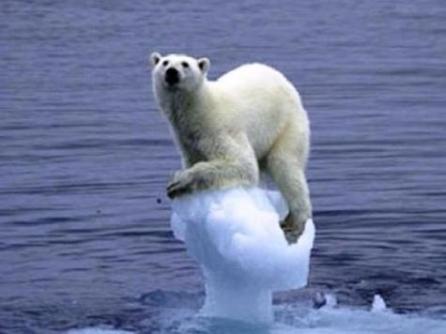 жертва глобального потепления