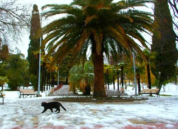 пальмы и снег - в сочи это возможно
