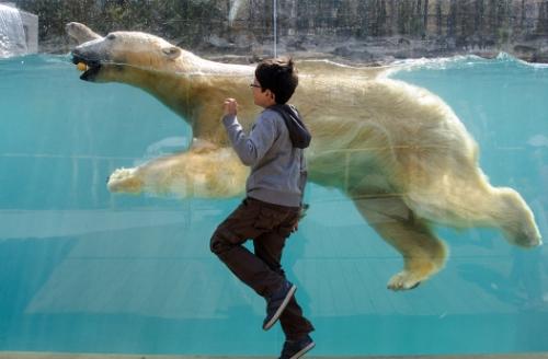 polar-bear-run