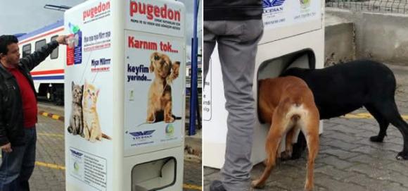 Подкормка бродячих собак: преступление и наказание