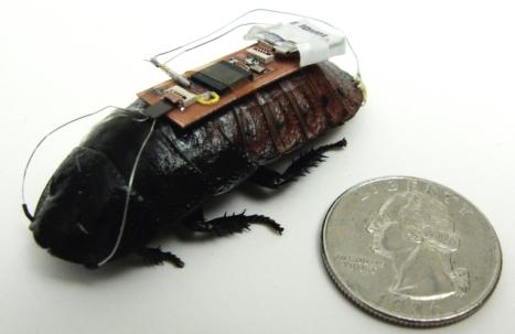 таракан с компьютером